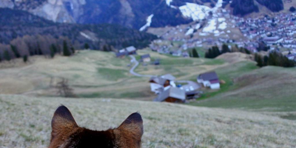 Katzenohren Dolomiten